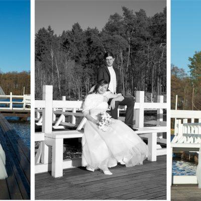 Jeleń zdjęcia ślubne